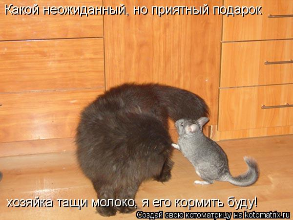 Котоматрица: Какой неожиданный, но приятный подарок хозяйка тащи молоко, я его кормить буду!
