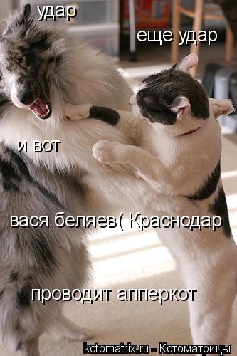 Котоматрица: удар  еще удар  и вот вася беляев( Краснодар проводит апперкот