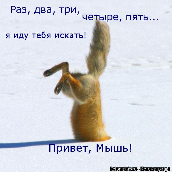 Котоматрица: Раз, два, три, четыре, пять... я иду тебя искать! Привет, Мышь!