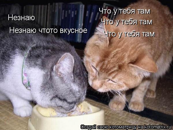 Котоматрица: Что у тебя там Незнаю чтото вкусное Что у тебя там Что у тебя там Незнаю