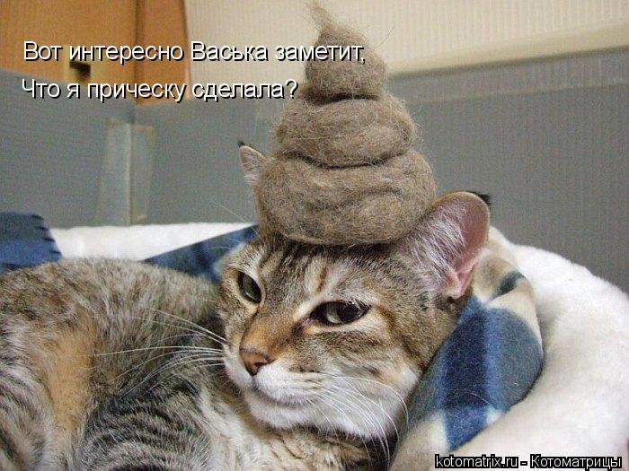 Котоматрица: Вот интересно Васька заметит, Что я прическу сделала?