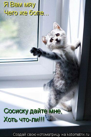Котоматрица: Я Вам мяу Чего же боле... Сосиску дайте мне, Хоть что-ли!!!