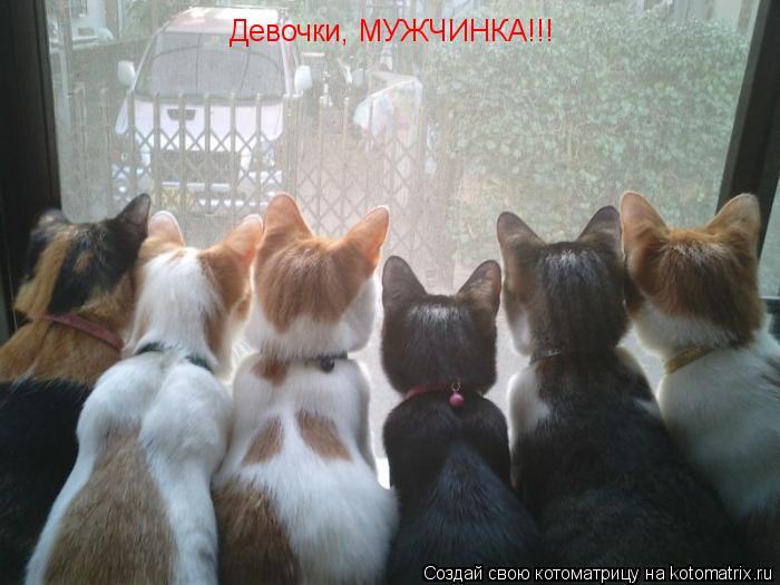 Котоматрица: Девочки, МУЖЧИНКА!!!