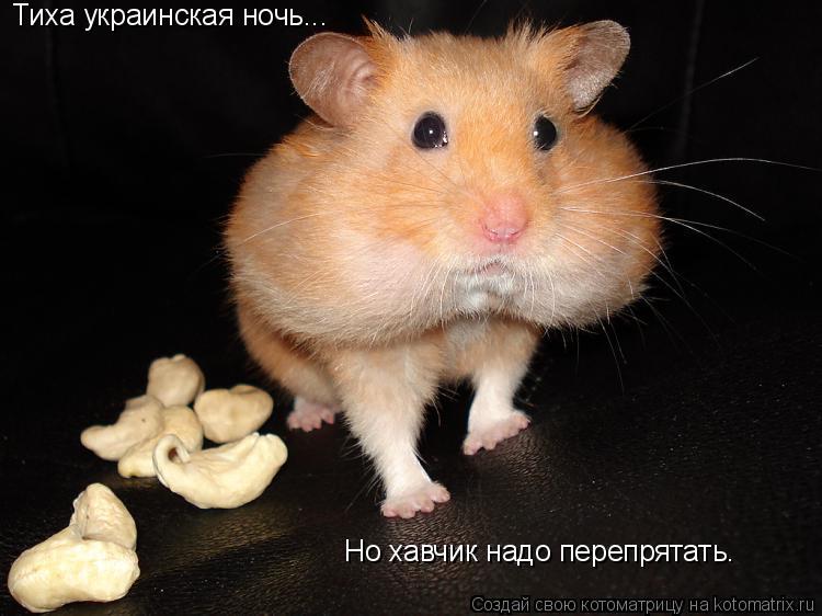 Котоматрица: Тиха украинская ночь... Но хавчик надо перепрятать.