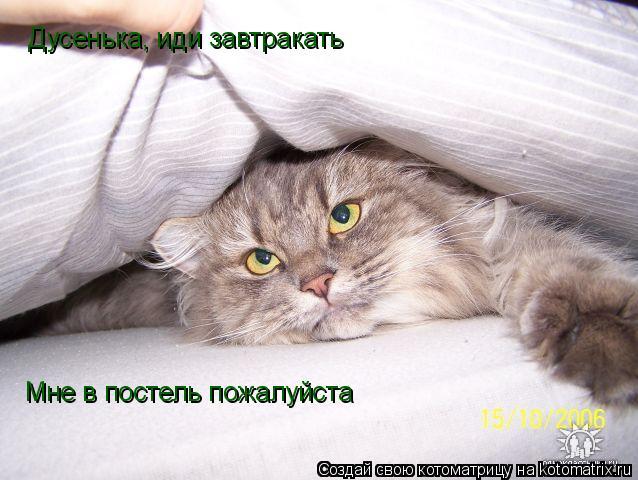 Котоматрица: Дусенька, иди завтракать Мне в постель пожалуйста