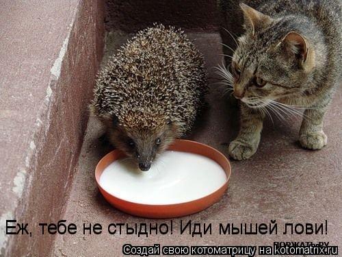 Котоматрица: Еж, тебе не стыдно! Иди мышей лови! Еж, тебе не стыдно! Иди мышей лови!