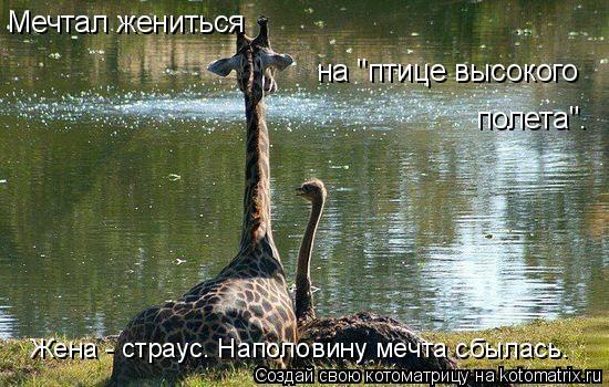 """Котоматрица: Мечтал жениться  на """"птице высокого  полета"""". Жена - страус. Наполовину мечта сбылась."""