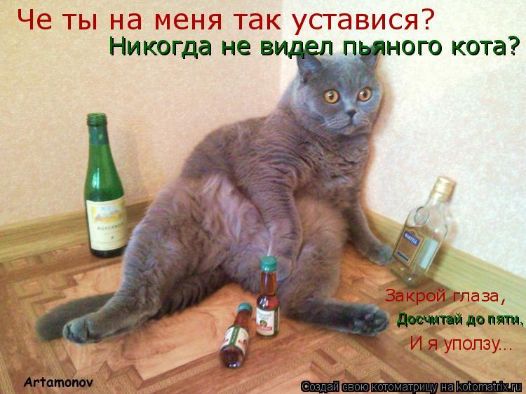 Котоматрица: Никогда не видел пьяного кота? Че ты на меня так уставися? Закрой глаза,  Досчитай до пяти, И я уползу...