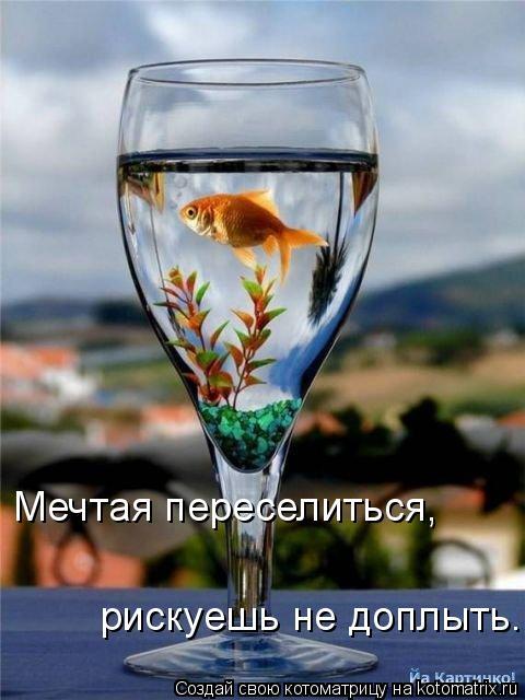 Котоматрица: Мечтая переселиться,  рискуешь не доплыть.
