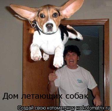 Котоматрица: Дом летающих собак