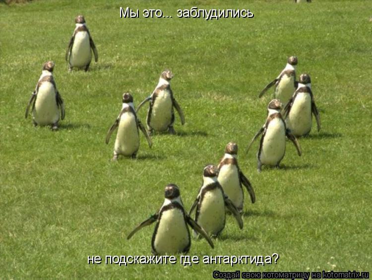 Котоматрица: Мы это... заблудились не подскажите где антарктида?