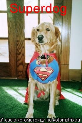 Котоматрица: Superdog