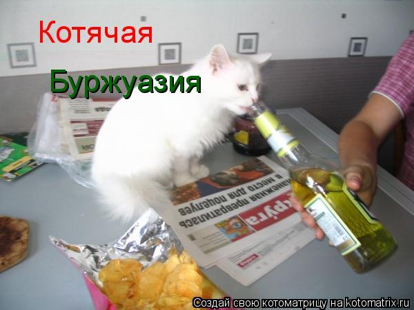 Котоматрица: Котячая Буржуазия