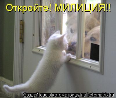 Котоматрица: Откройте! МИЛИЦИЯ!!
