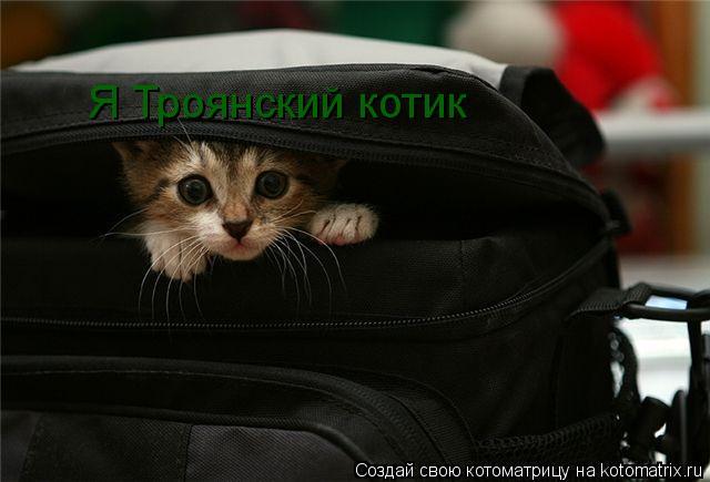 Котоматрица: Я Троянский котик