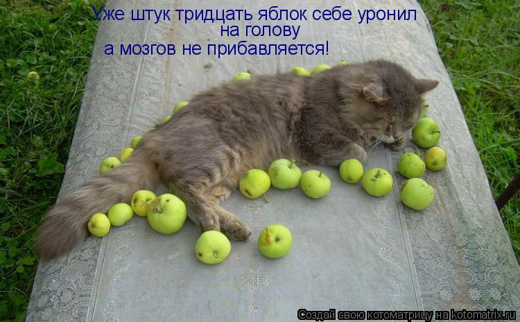 Котоматрица: Уже штук тридцать яблок себе уронил на голову а мозгов не прибавляется!