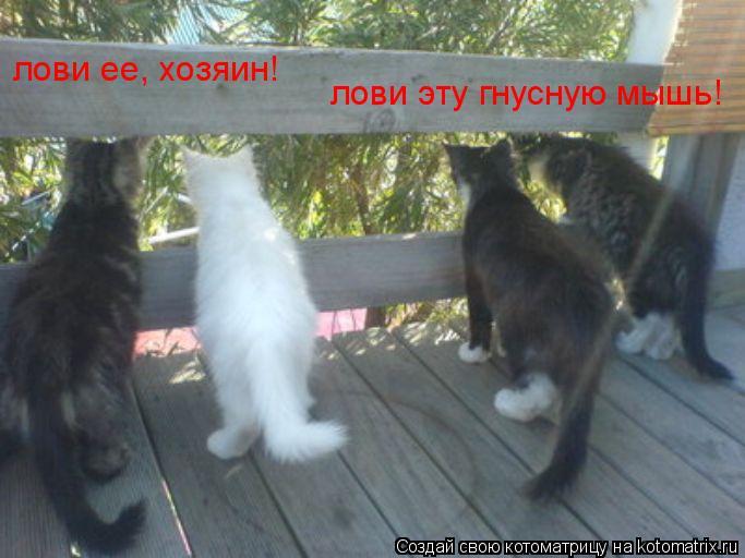 Котоматрица: лови ее, хозяин! лови эту гнусную мышь!