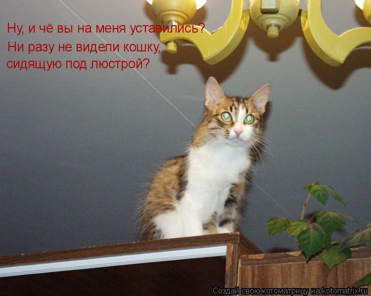 Котоматрица: Ну, и чё вы на меня уставились? Ни разу не видели кошку, сидящую под люстрой?