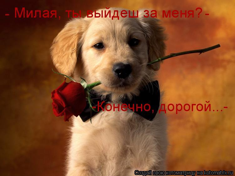 Котоматрица: Милая, ты выйдеш за меня? - - -Конечно, дорогой...-
