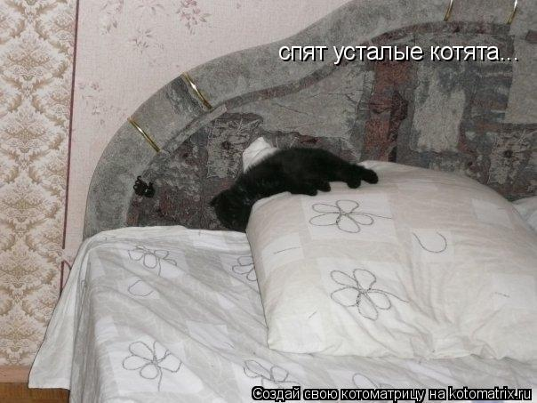Котоматрица: спят усталые котята...