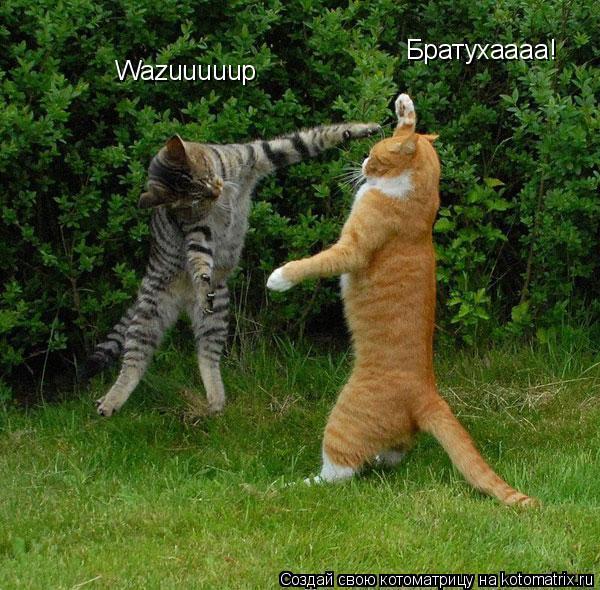 Котоматрица: Братухаааа! Wazuuuuup