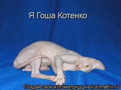 Котоматрица: Я Гоша Котенко