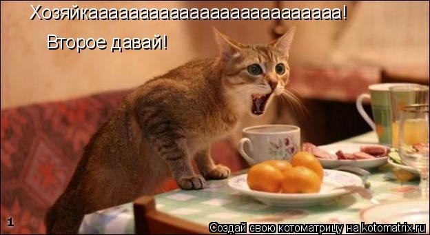 Котоматрица: Хозяйкааааааааааааааааааааааааа! Второе давай!