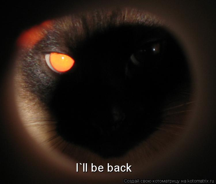Котоматрица: I`ll be back
