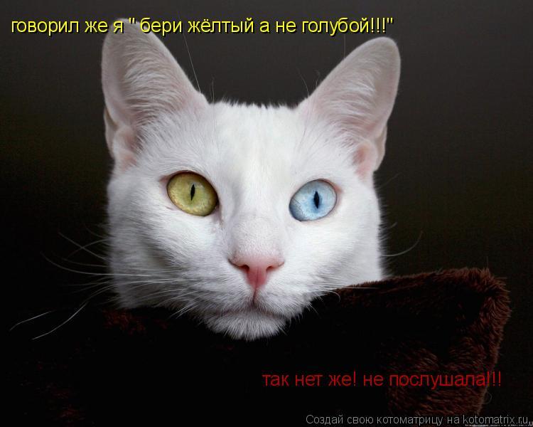 """Котоматрица: говорил же я """" бери жёлтый а не голубой!!!"""" так нет же! не послушала!!!"""