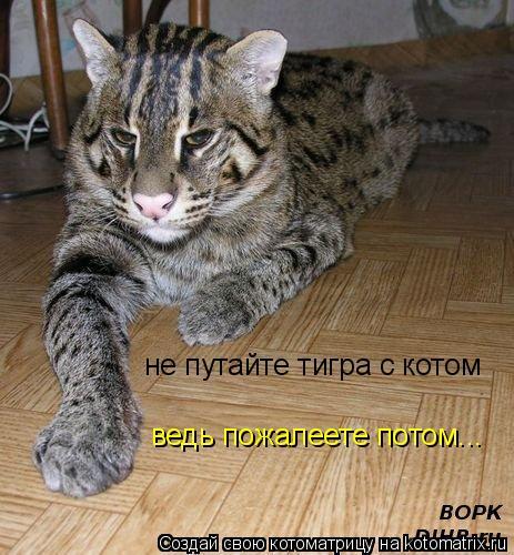 Котоматрица: не путайте тигра с котом ведь пожалеете потом...