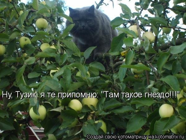 "Котоматрица: Ну, Тузик, я те припомню: ""Там такое гнездо!!!"""