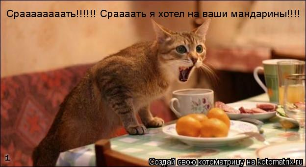 Котоматрица: Сраааааааать!!!!!! Сраааать я хотел на ваши мандарины!!!!