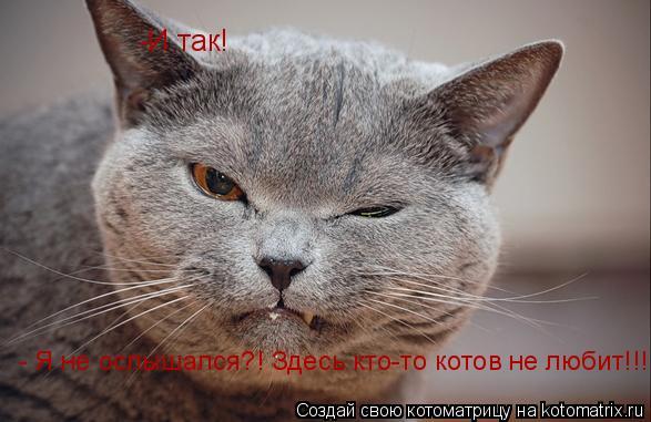 Котоматрица: -И так! - Я не ослышался?! Здесь кто-то котов не любит!!!