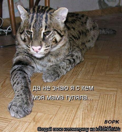 Котоматрица: да не знаю я с кем моя мама гуляла...