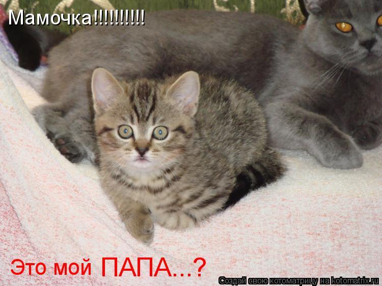 Котоматрица: Мамочка!!!!!!!!!!  Это мой ПАПА...?