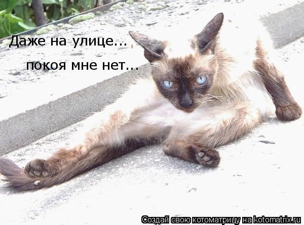 Котоматрица: Даже на улице... покоя мне нет...