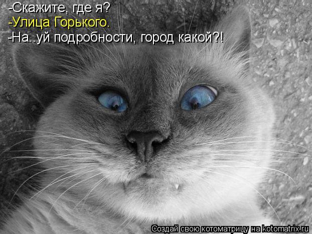 Котоматрица: -Скажите, где я? -Улица Горького. -На..уй подробности, город какой?!