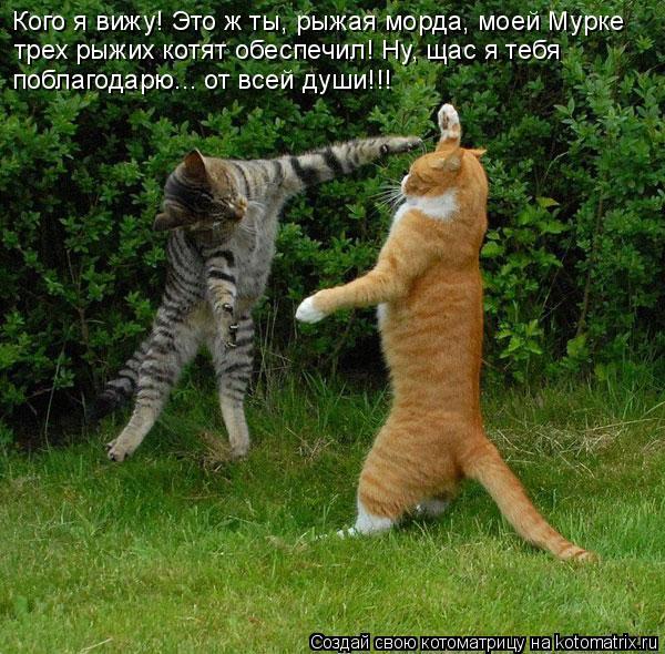Котоматрица: Кого я вижу! Это ж ты, рыжая морда, моей Мурке трех рыжих котят обеспечил! Ну, щас я тебя поблагодарю... от всей души!!!