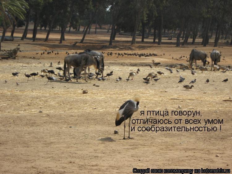 Котоматрица: я птица говорун,  отличаюсь от всех умом и сообразительностью !