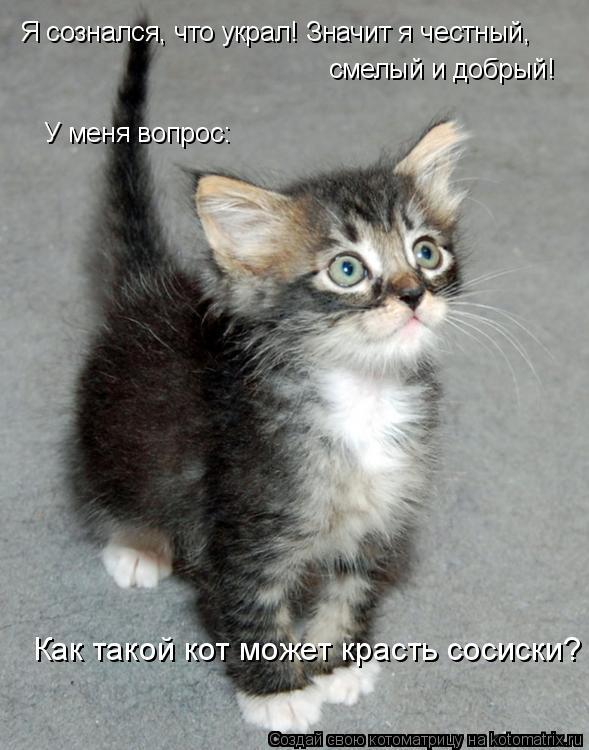 Котоматрица: Я сознался, что украл! Значит я честный, смелый и добрый! У меня вопрос: Как такой кот может красть сосиски?