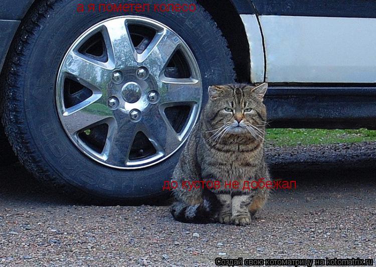 Котоматрица: а я пометел колесо до кустов не добежал