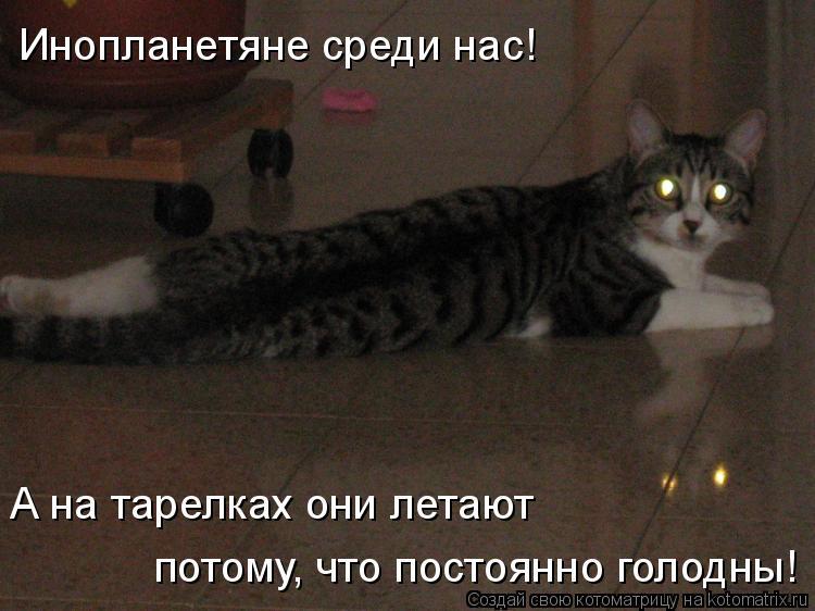Котоматрица: Инопланетяне среди нас! А на тарелках они летают потому, что постоянно голодны!