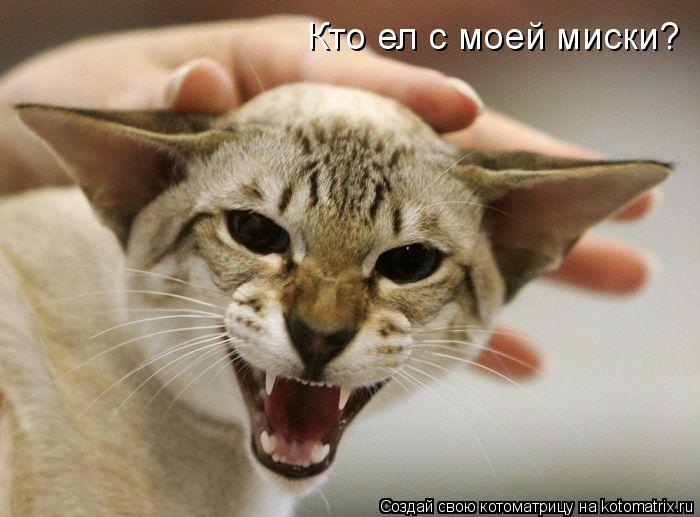 Котоматрица: Кто ел с моей миски?