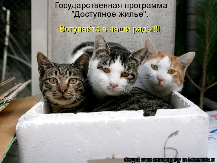 """Котоматрица: Государственная программа """"Доступное жилье"""". Вступайте в наши ряды!!!"""