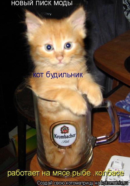 Котоматрица: новый писк моды кот будильник работает на мясе.рыбе .колбасе