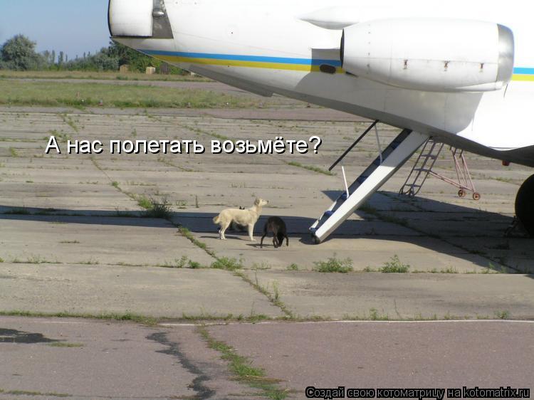 Котоматрица: А нас полетать возьмёте?