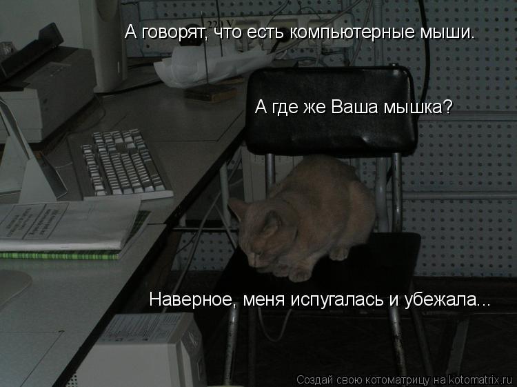 Котоматрица: А говорят, что есть компьютерные мыши. А где же Ваша мышка? Наверное, меня испугалась и убежала...