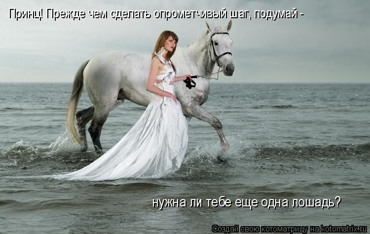 Котоматрица: Принц! Прежде чем сделать опрометчивый шаг, подумай -  нужна ли тебе еще одна лошадь?