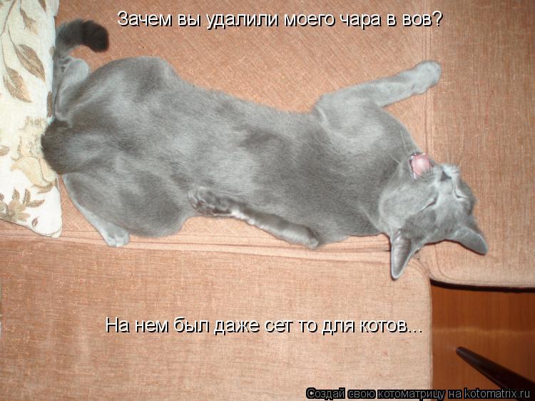 Котоматрица: Зачем вы удалили моего чара в вов? На нем был даже сет то для котов...