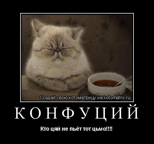 Котоматрица: Конфуций Кто цяй не пьёт тот цьмо!!!!
